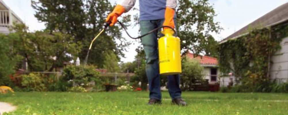 Cleaning Weeds With Natural Ingredients